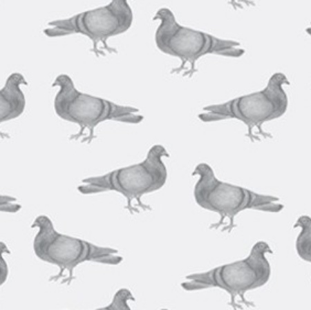 Pigeon Thornback and Peel quirky wallpaper