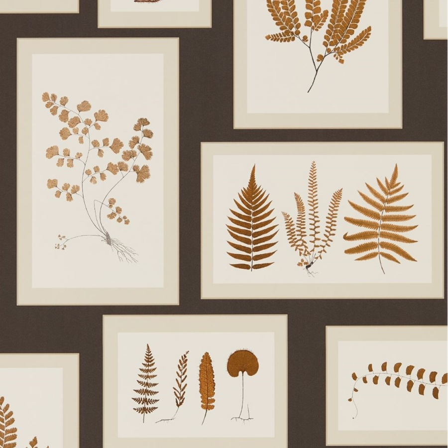 wallpaper of fern prints in frames hung on black wall gallery style