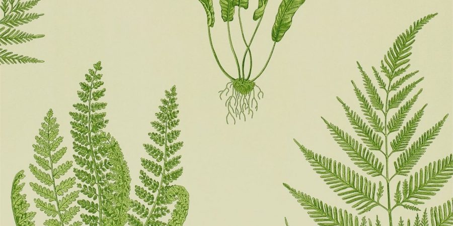 Sanderson woodland ferns green leaf wallpaper