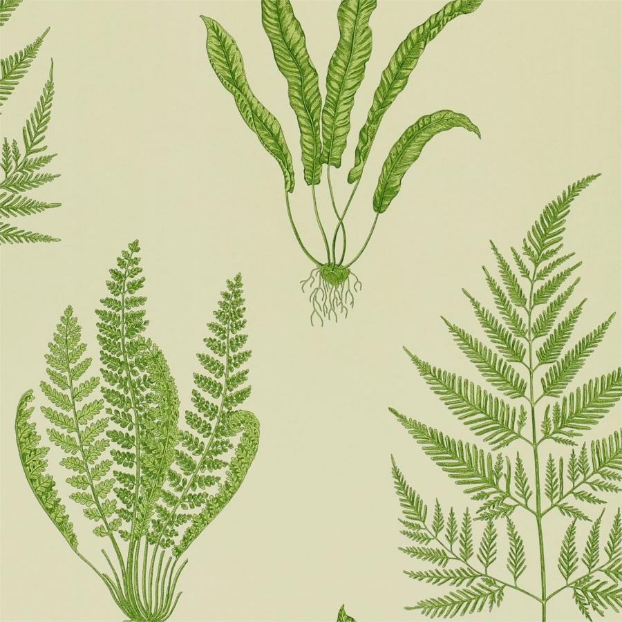 Sanderson woodland ferns green leaf wallpaper
