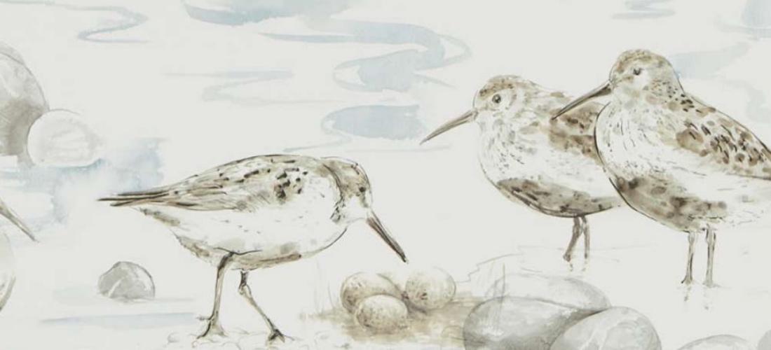 Sanderson Estuary Birds Blue Grey wallpaper